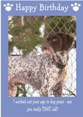 "German Short Haired Pointer-Happy Birthday - ""Are You Really THAT Old"" Theme"
